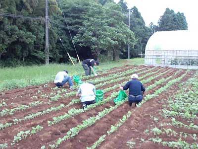 三里塚(成田)闘争 農家での援農 2010年6・27