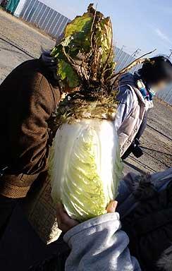 三里塚反対同盟2011新年デモにて白菜の根っこ