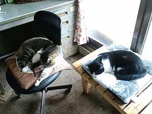 鈴木加代子さん宅の猫ちゃんたち