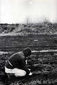 三里塚の畑(70年代)