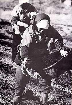三里塚の畑仕事(70年代)