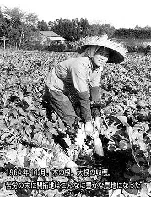1964(昭和39)年11月。木の根。大根を収穫しているところ。苦労の末に開拓地はこんなに豊かな農地になった