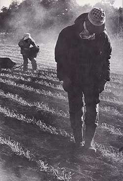 三里塚での野良仕事風景(70年代)