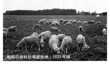 戦前の御料牧場放牧地