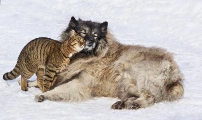 [無料写真] 仲良しの犬と猫