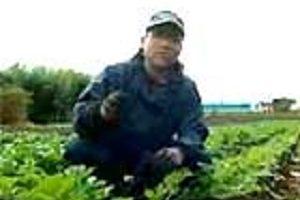 2009 ドイツで放映された三里塚(成田)闘争の現在
