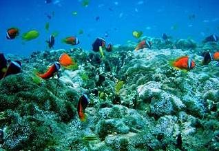 辺野古埋め立て予定地の海底