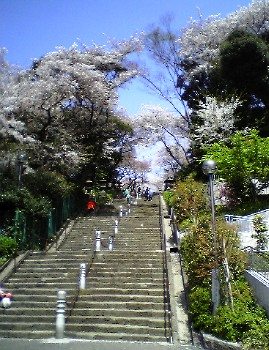 池上本門寺の階段