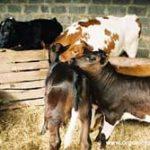 牛肉問題から見える資本主義