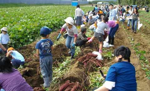 三里塚・収穫祭