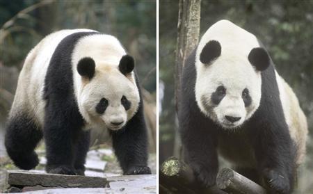 上野動物園にパンダが来た