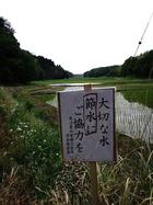 三里塚・横堀現地集会とデモ 23