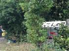 2・22 ジグザグ会沖縄派遣団1日目 79